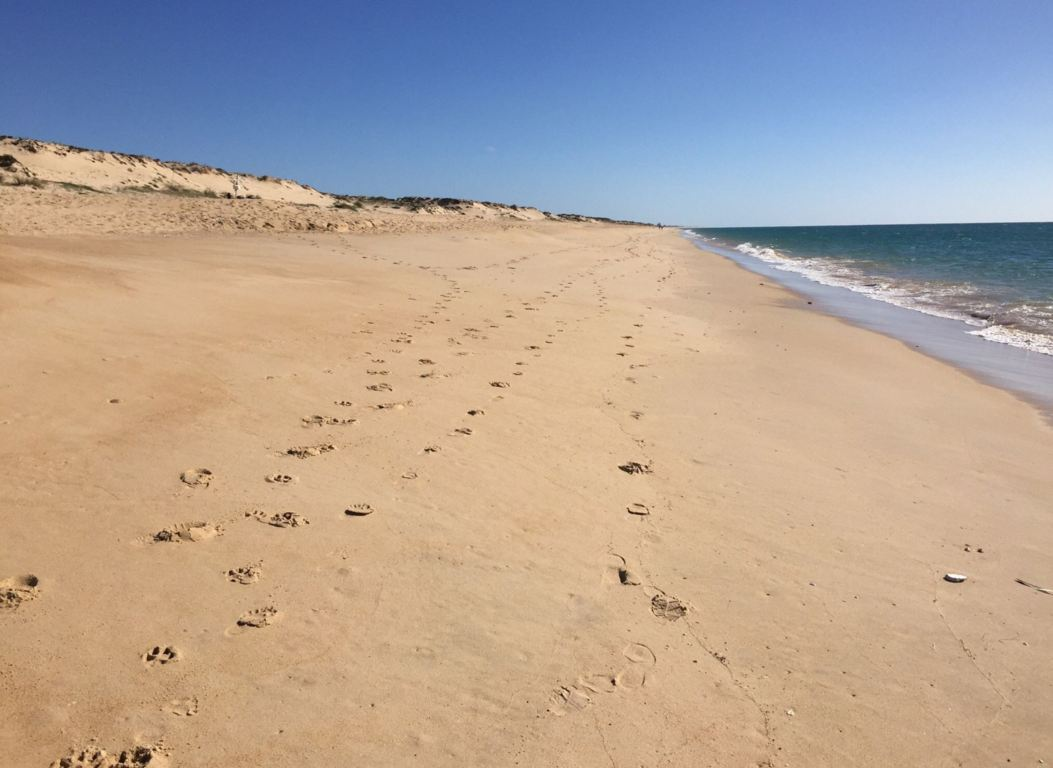 Walking on Faro beach