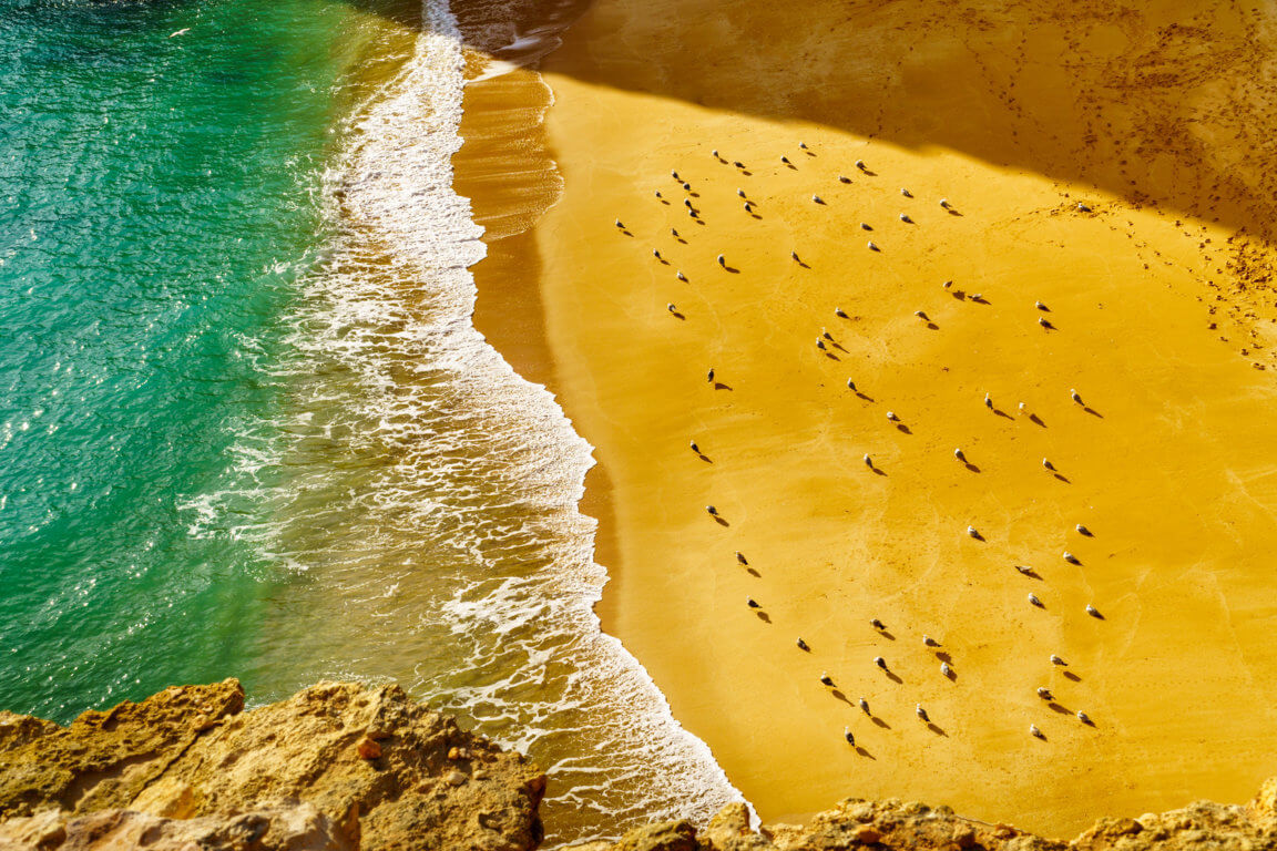 Birds on Praia da Corredoura